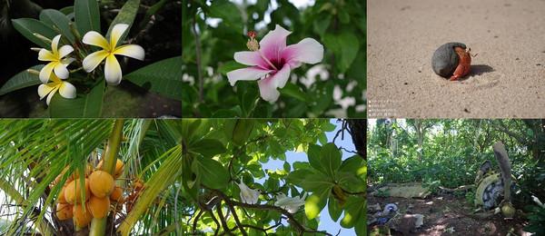 アンガウル島の動植物